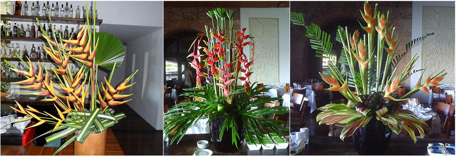 plantas jardins tropicais : plantas jardins tropicais:TROPYFLORA – Flores Tropicais em Salvador Bahia